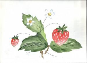 les fraises dans annuaire numerisation0001-56-300x218